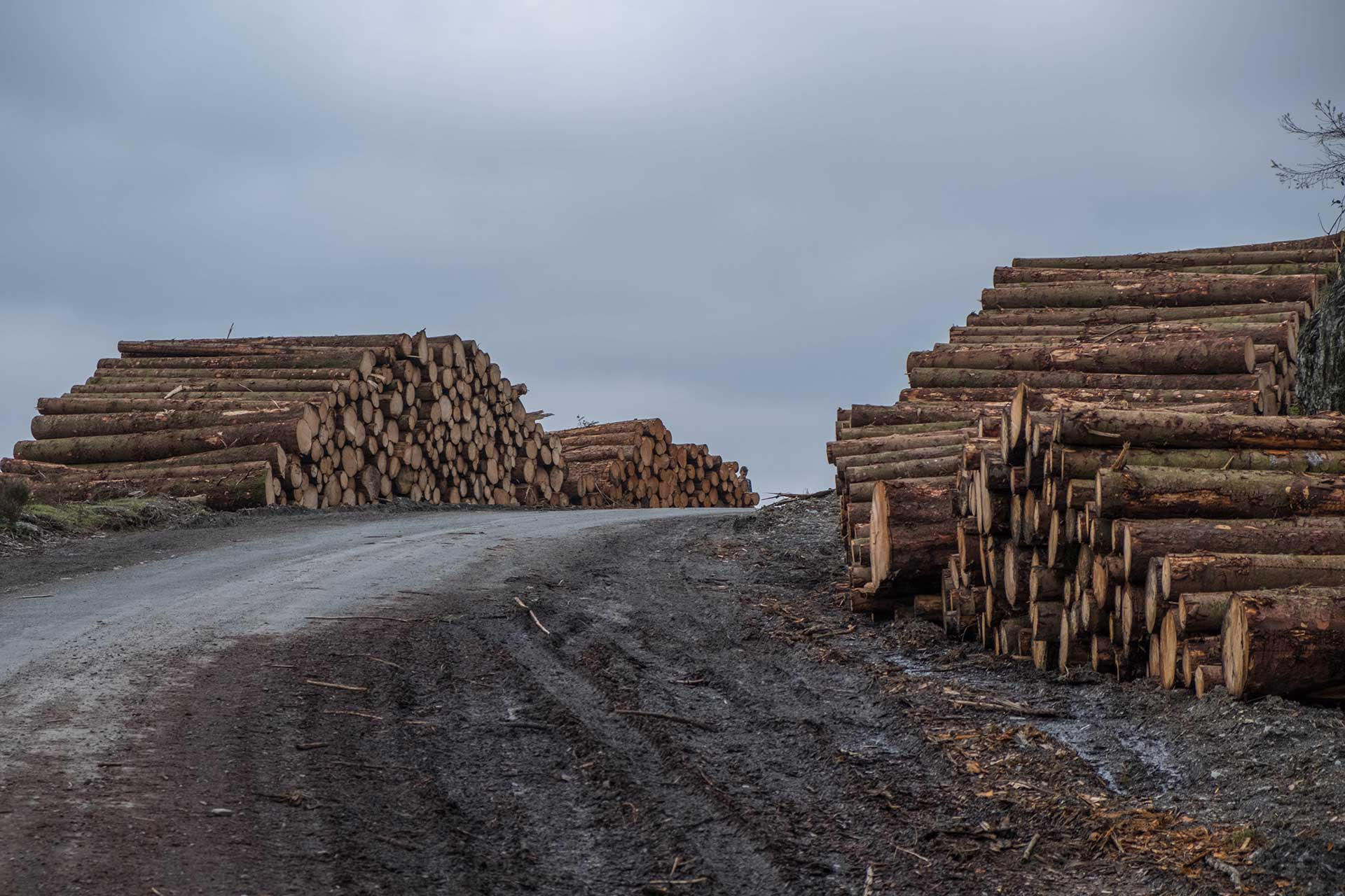 Lumber - Herges Capital Management